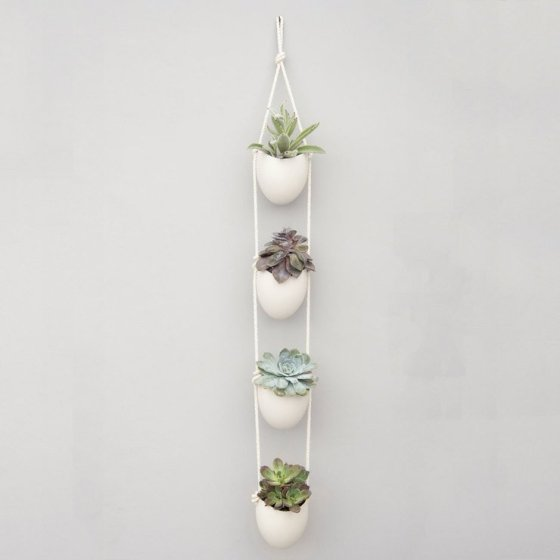Plant succulents in a wall planter for instant freshness inside your home
