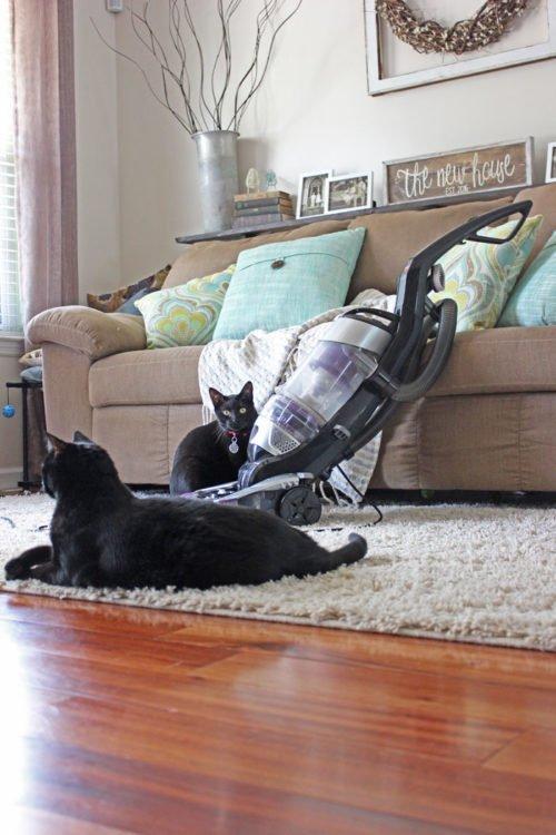Vacuum daily to reduce pet dander