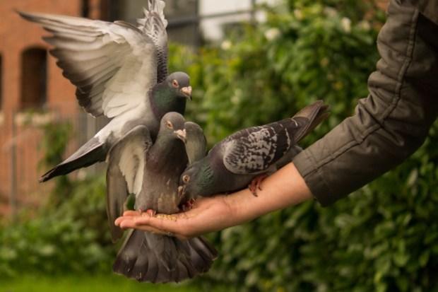 Merdunya Suara Burung Lakbet dan Berbagai Jenis Burung Lakbet