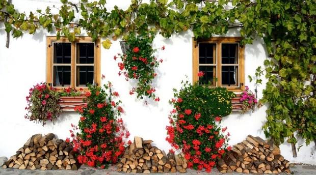 15 Jenis Bunga Yang Cocok Untuk Taman Minimalis
