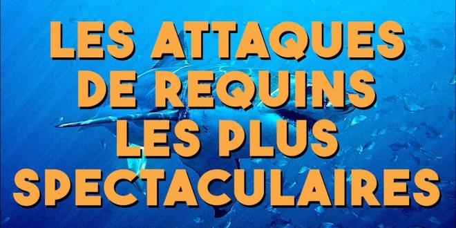Les attaques de requins les plus spectaculaires !