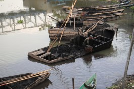 Pemanfaatan humus enceng gondok dari dasar Danau Rawapening (6)