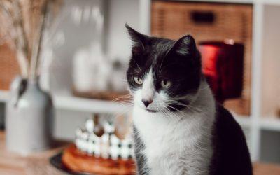 Adopter un chat : l'histoire de Cachou et son adoption