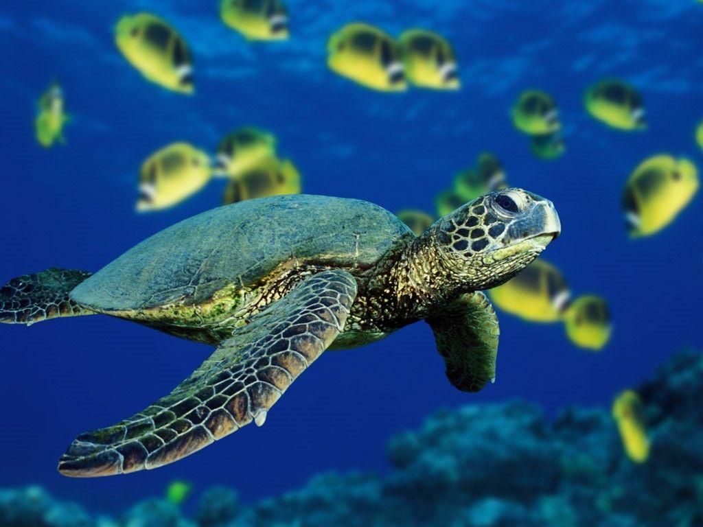 Image result for konservasi kura kura pulau serangan