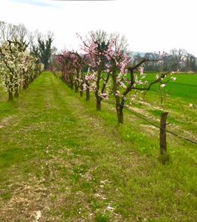 #lemarchemagic #lemarche #agriturismo #farmlife #bio #goodliving #Italianadventures #worldofbees #chickens #bnb #FonteCarrà