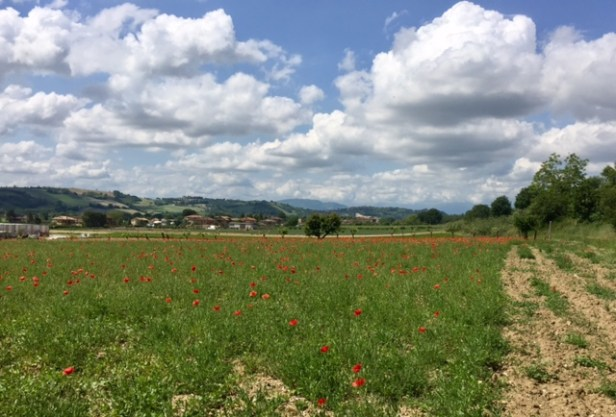 #photo #challenge #weekly photo challenge #photography #lemarchemagic #landscapes #poppies
