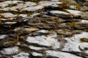Mossy stones in river bed