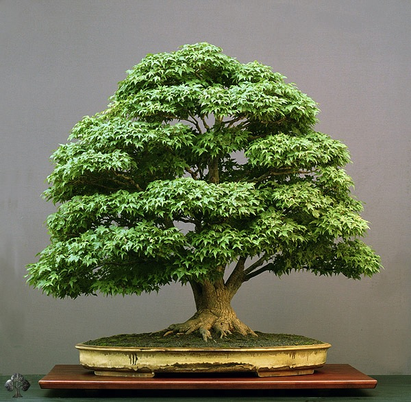 bonsai style japon le melting potes wabi-sabi