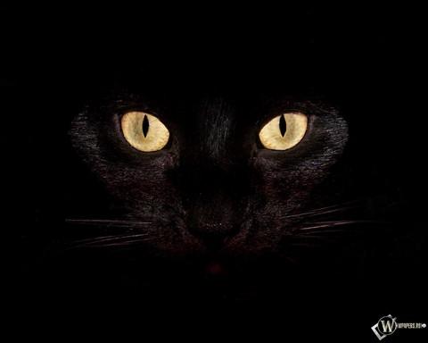 Zomrel čierna mačička