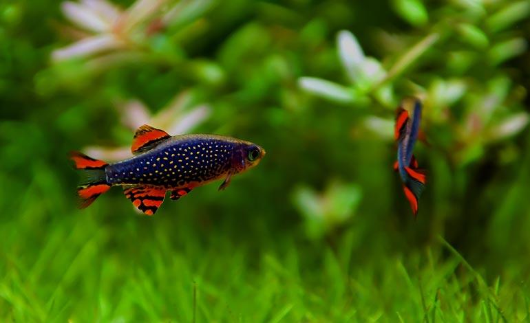Akvaario artikkelit