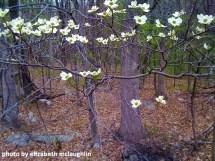 flowerstree