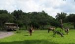 kilimanjaro-safari-2