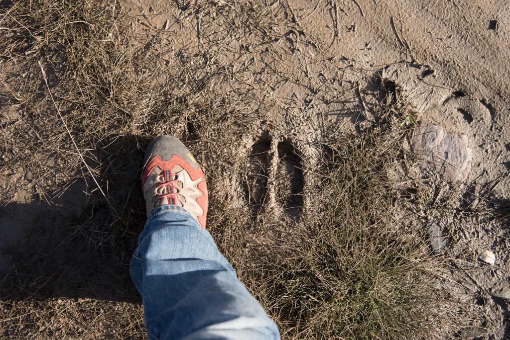 Pas d'animaux mais quelques traces