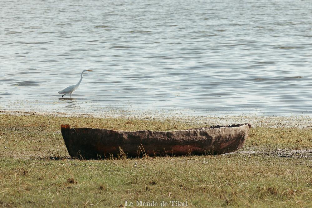 belize creek tree oiseau aigrette bateau