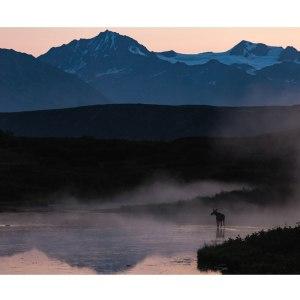 Elan-dans-la-brume-Alaska