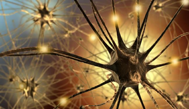 neuron-genetic-evolution