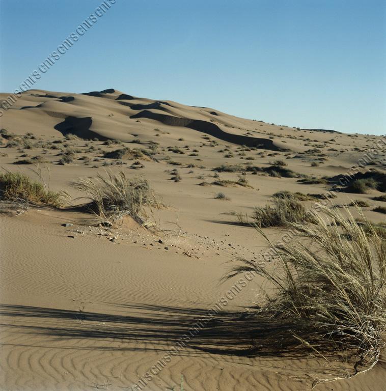 herbe_dune