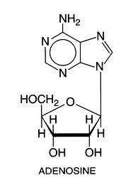 adénosine