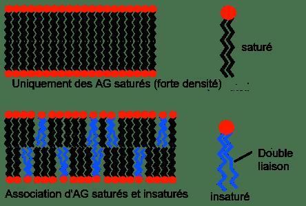 lipid_membrane