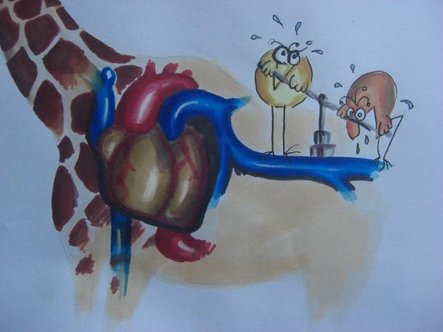 girafe2