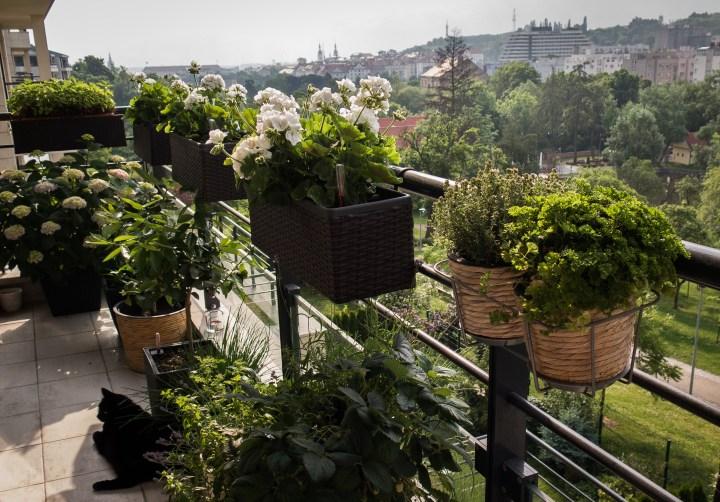 Zelený balkon – rychlý fotoupdate