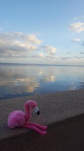 5h30, Pinko attend son bateau sur la Marina de Cairns
