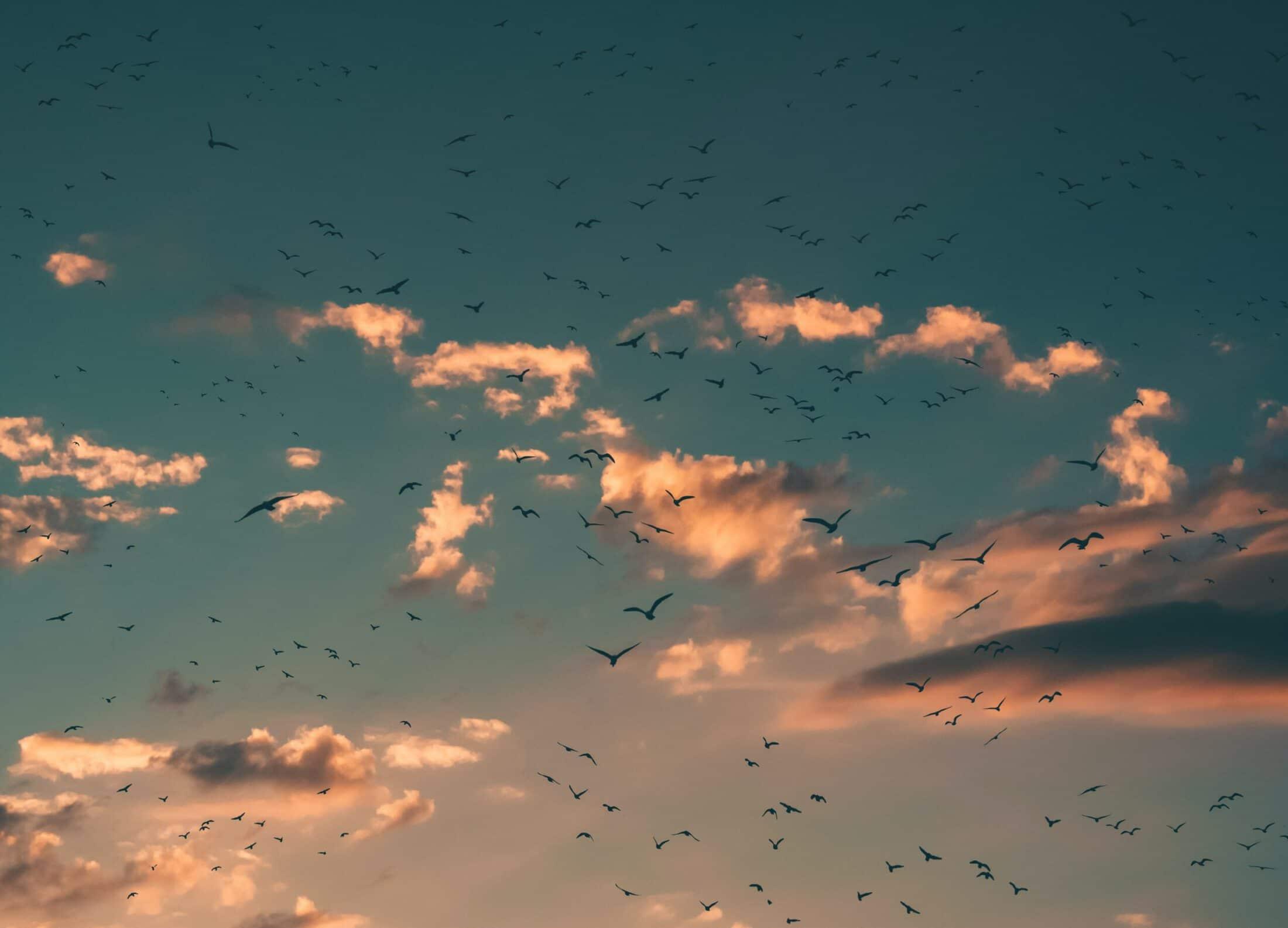 Bild von Abendhimmel in dem viele Vögel fliegen. Warum wir aufhören sollten, für andere Menschen zu denken.