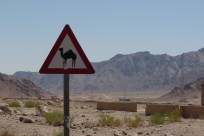 P1110784 camels crossing sign