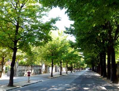 Tree-lined street and home of Monday market