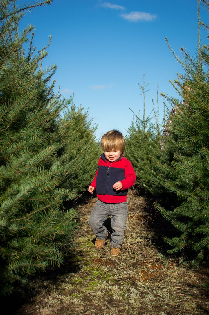 Hunter's Christmas Tree Farm