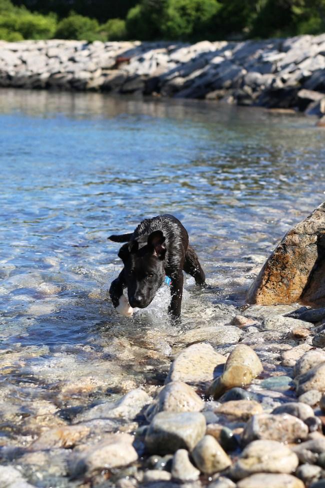 Swimming Puppy