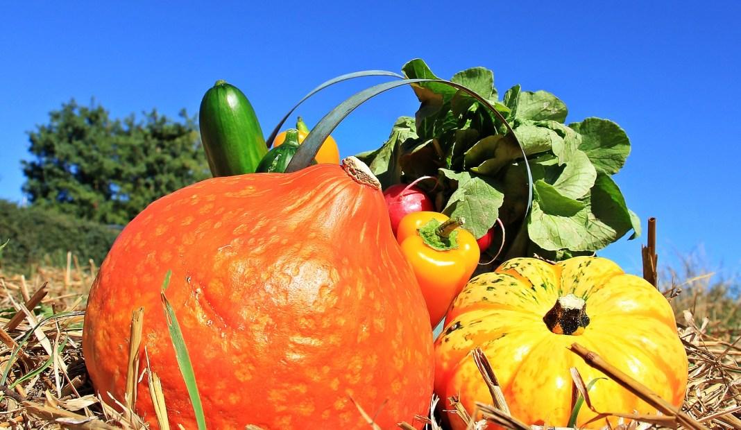 légumes paniers solidaires