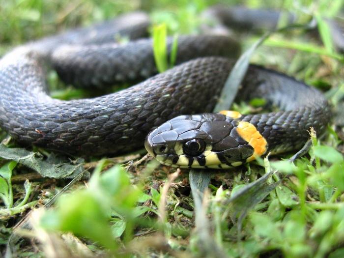 Sokkoló: minden negyedik percben meghal egy ember kígyómarás miatt