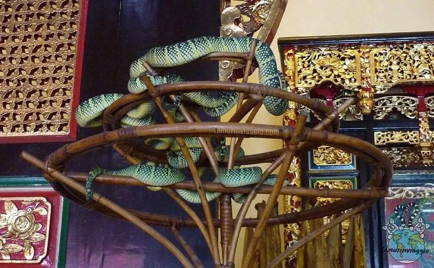Tempio dei serpenti a Penang Malesia