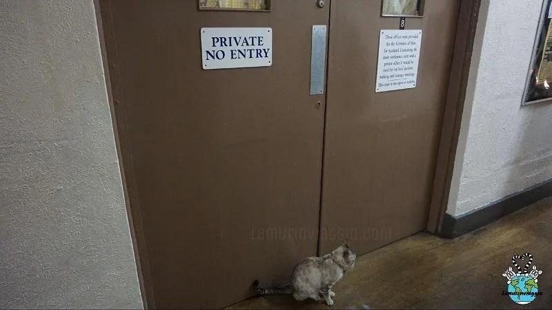 La gattina Cleo davanti alle stanze top secret del bunker di Scozia