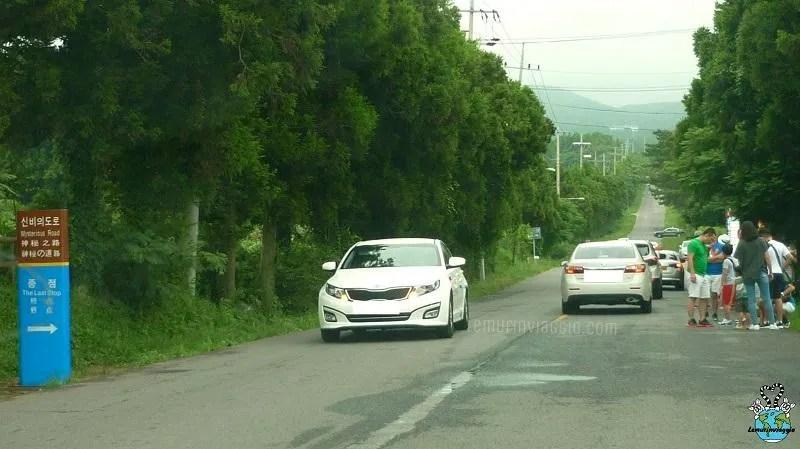 auto che percorrono la strada misteriosa di Jeju