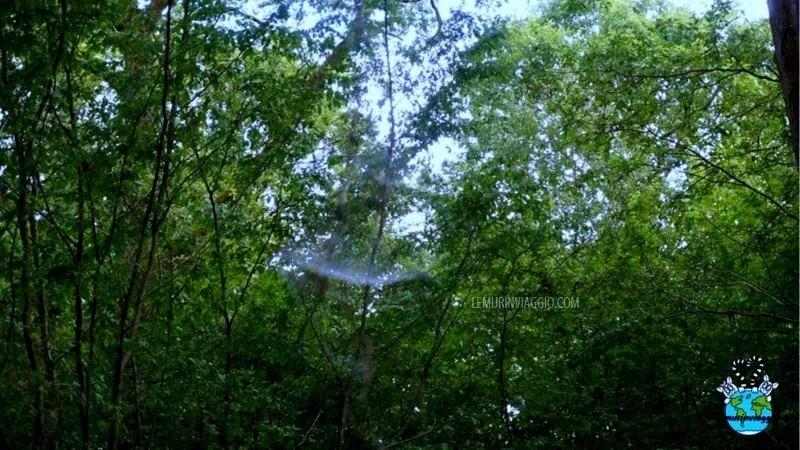 La foresta di Dering è chiamata anche Screaming wood
