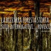 La bizzarra foresta storta e i suoi interrogativi... rovesciati