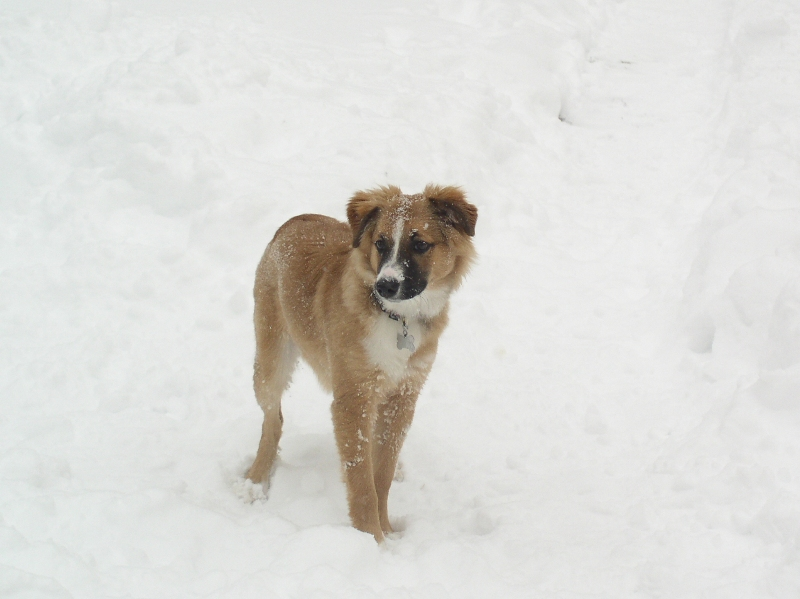 zoe-snowdog