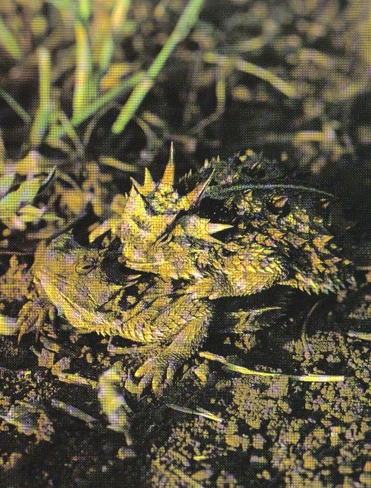 humpin lizards