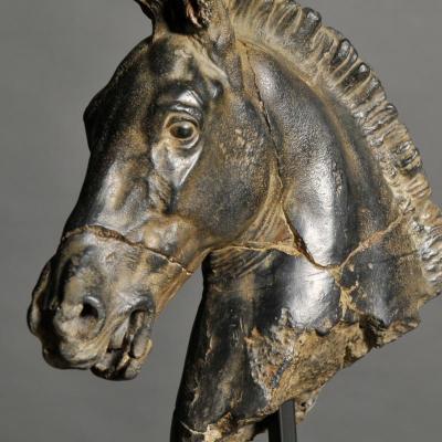 testa cavallo monti(1)