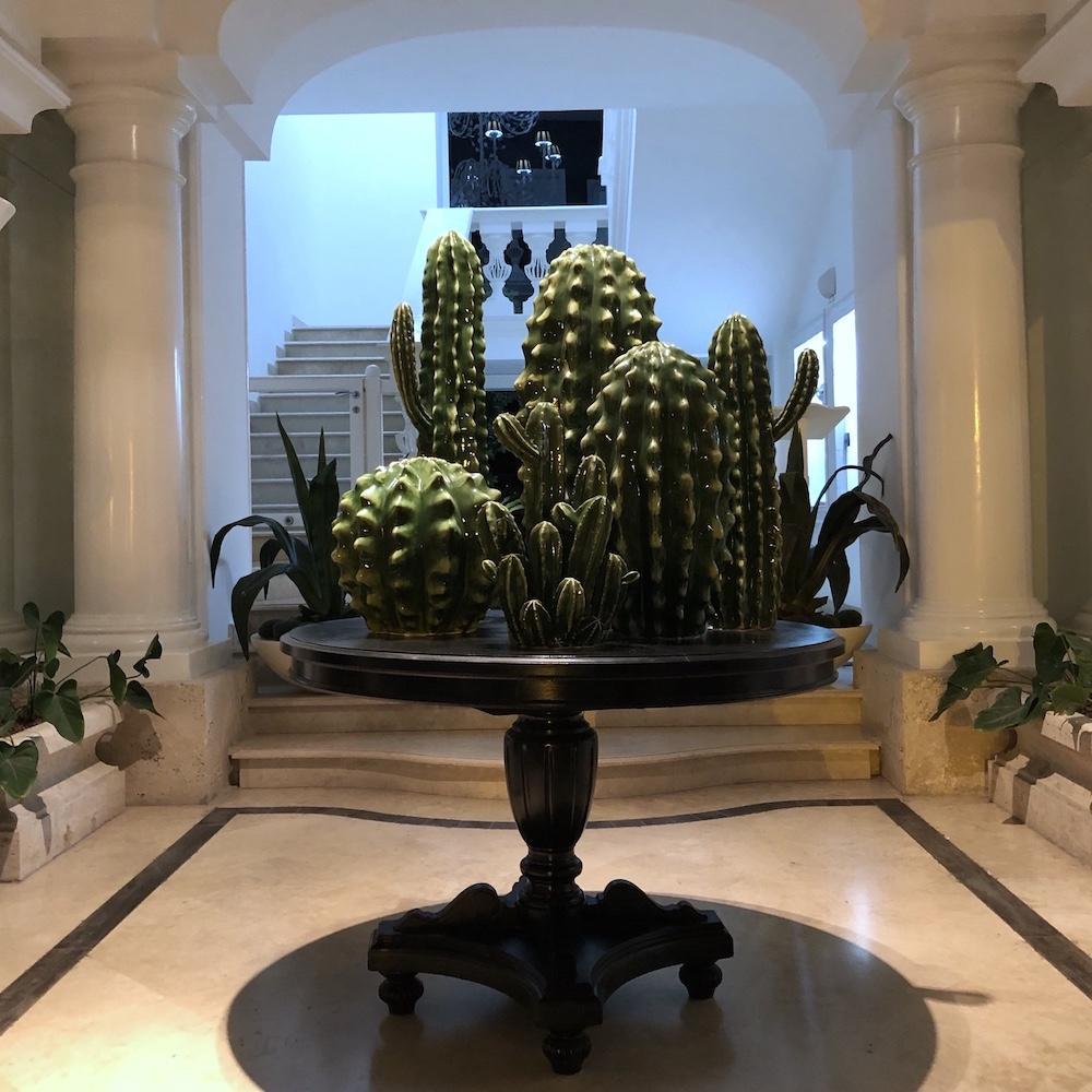 cactus gruppo