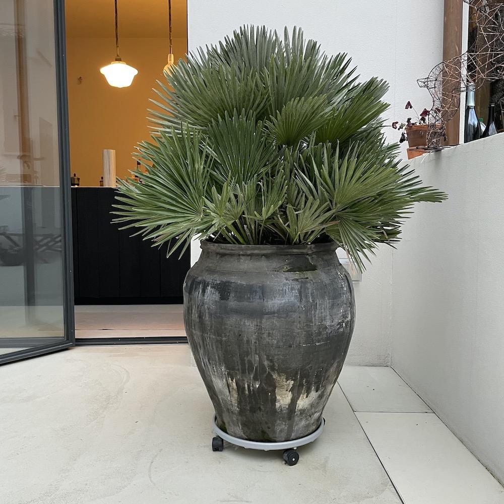 grande vaso vintage