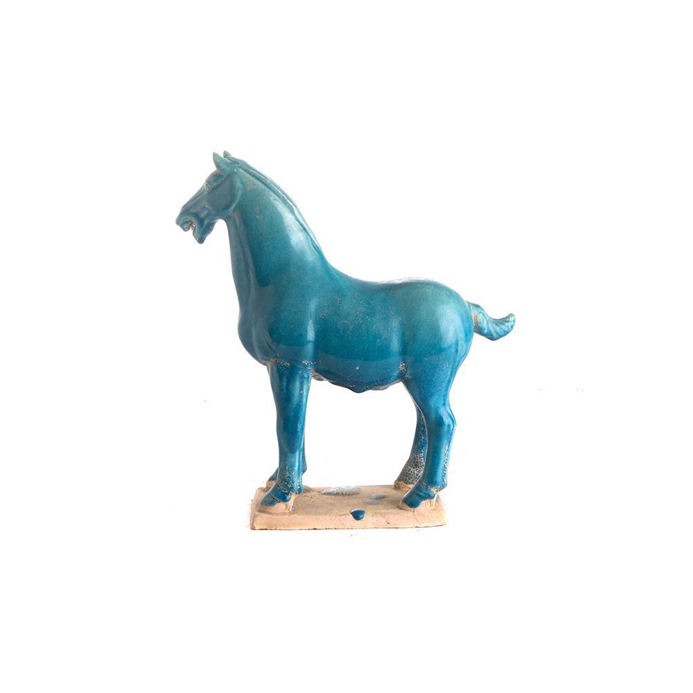 cavallo turchese M