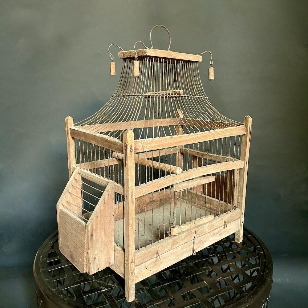gabbietta uccelli