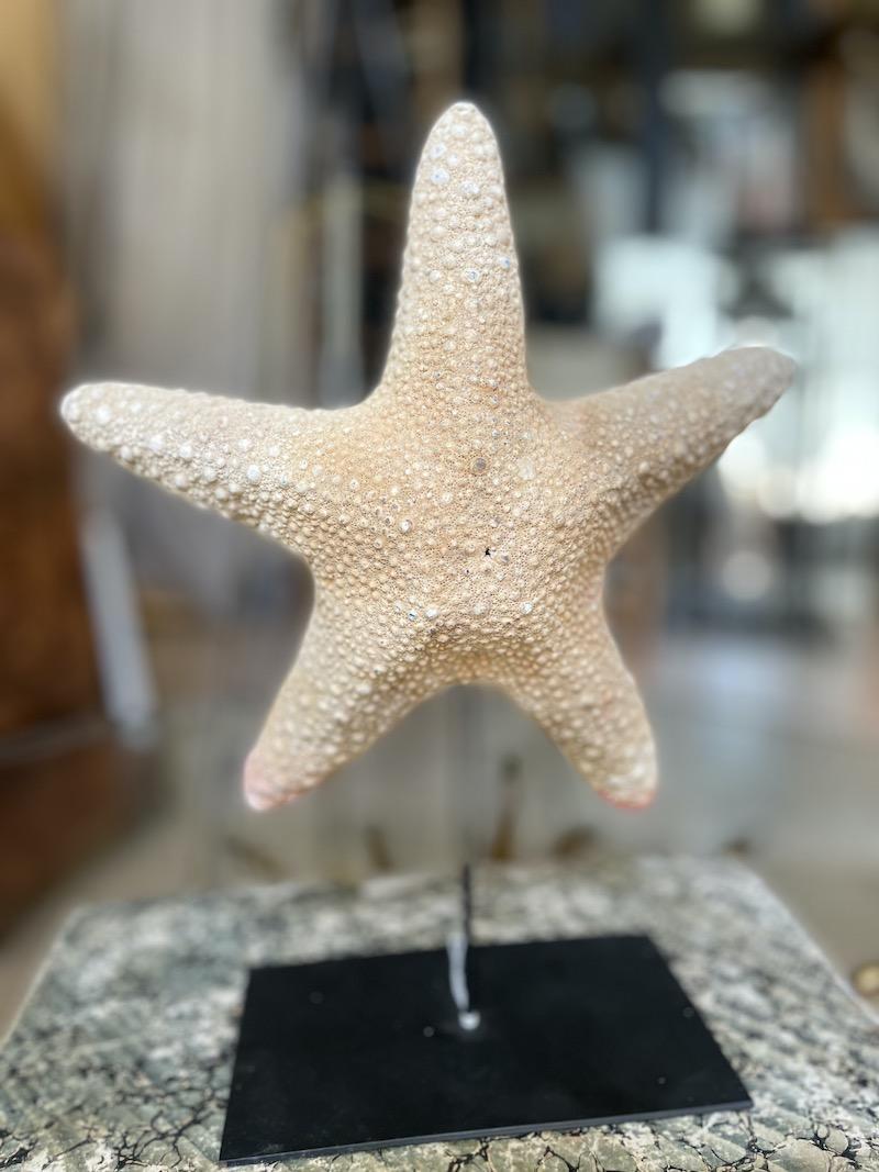 stella marina piedistallo ferro