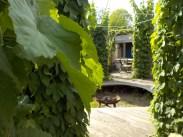 4-klause-feuerstelle-grillen-pflanzen-gruenerbeton