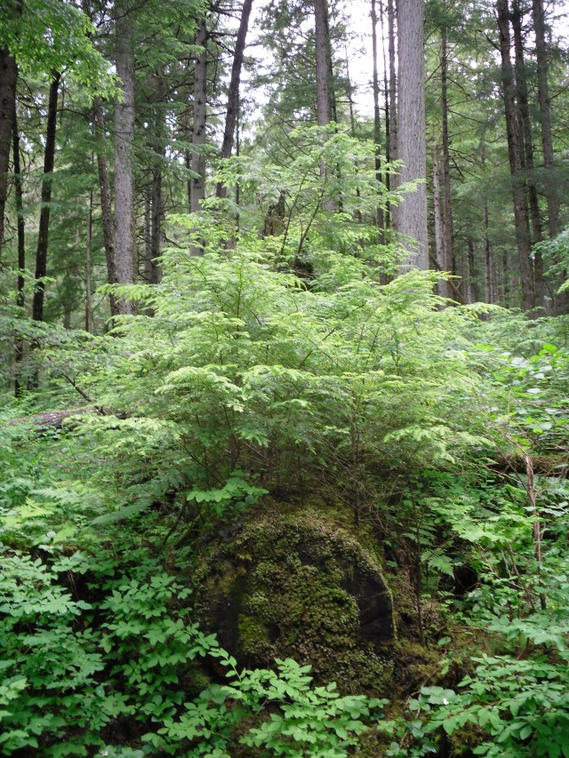 Tree Trunk and Ferns