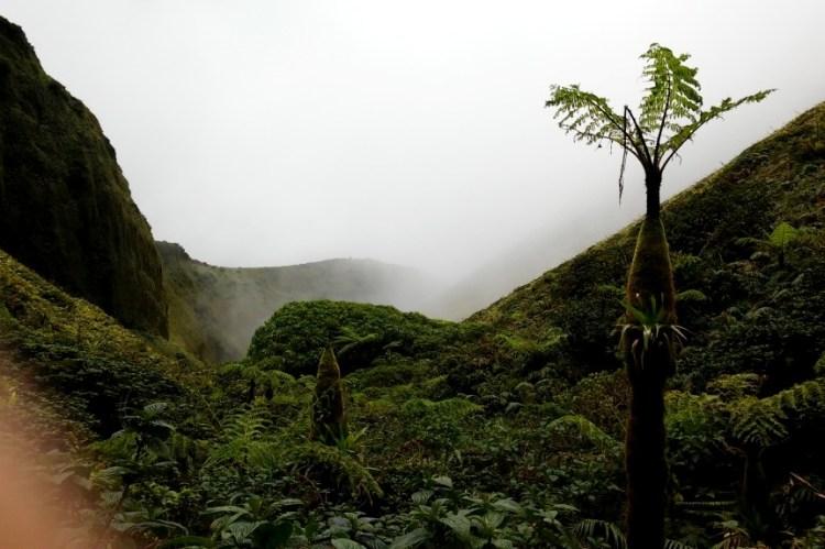 Mount Pelee Crater