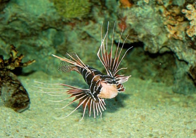 lion fish cathedral wall
